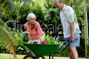 Senior couple holding wheelbarrow and flower pots