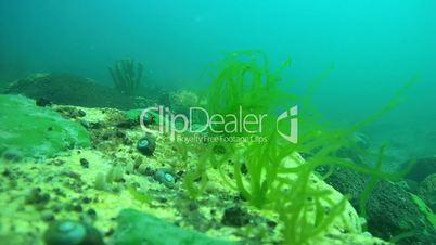 Reef overgrown with algae, Siberia, the Russian Federation, Eurasia