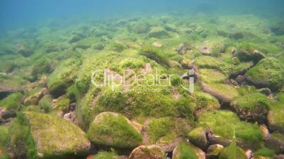 Rocky bottom overgrown with algae, Siberia, the Russian Federation, Eurasia