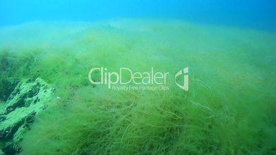 Rocky-sandy bottom overgrown with algae, Siberia, the Russian Federation, Eurasia
