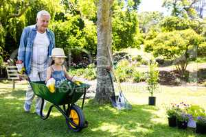 Grandfather carrying his granddaughter in a wheelbarrow