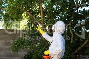 Man spraying insecticide on tree