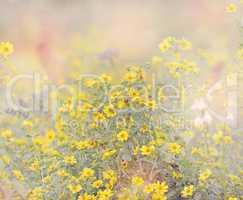 Wild Flowers Blossom