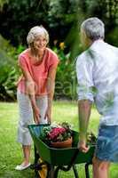 Senior couple with wheelbarrow and flower pots in yard