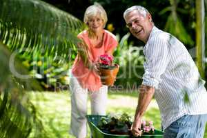 Senior couple with wheelbarrow and flower pot in yard