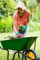 Senior woman holding flower pots in yard