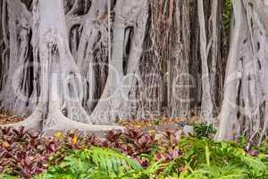 Bäume auf Teneriffa