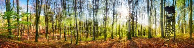 Panorama von Wald mit Sonne im Frühling