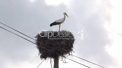 Stork Sitting in Nest, on a pillar high voltage power lines