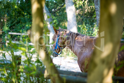 Horse standing behind a tree