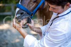 Close up on a woman vet examining horses teeth