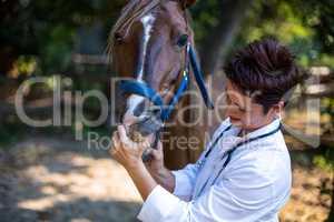 Portrait of woman vet examining horses teeth