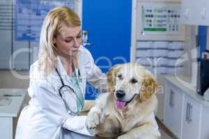 Woman vet examining the dogs paw