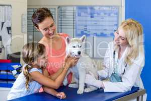 Woman vet and dogs owners smiling and holding a cute puppy