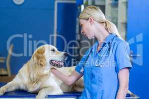 Woman vet stroking a dog