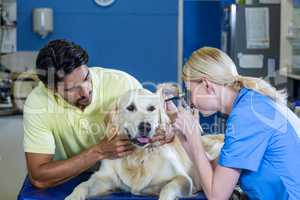 Owner holding his dog during the vet examination