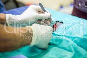 Close up of man vet operating on animal
