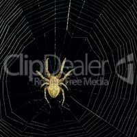 dangerous spider web background at night