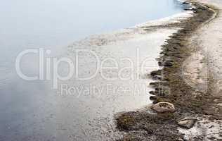 Beach with dirty algae by still water.