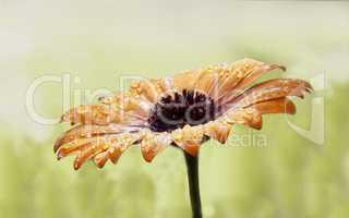 Blütenpracht nach Regen