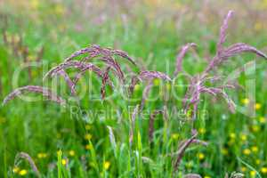 Tall grass at springtime