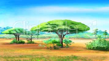 Acacia Trees in African bush