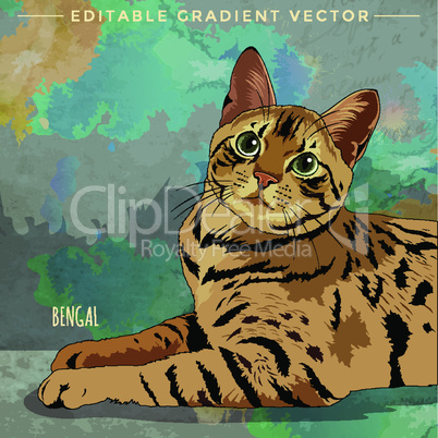 Bengal Cat. Vector illustration of a cat at home.