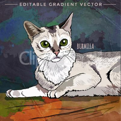 Burmilla Cat. Vector illustration of a cat at home.
