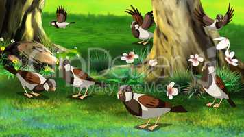 Flock of Sparrows ..Feeding in the Forest