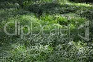 Tall green grasses in detail