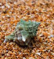 Wet seashell on sand in sunny day