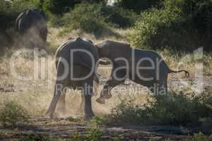 Baby elephant charges another in dust cloud