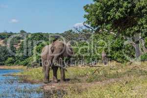 Elephant giving itself dust bath beside river