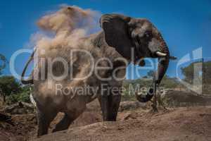 Elephant in cloud of dust beside logs