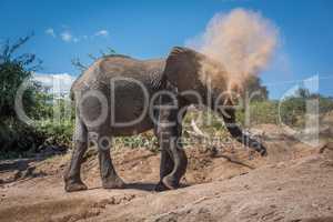 Elephant in cloud of dust on hillside