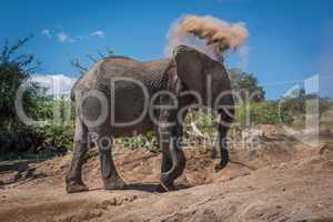Elephant throwing dust over head on hillside
