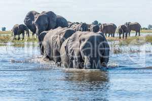 Herd of elephants crossing river towards camera