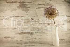 Allium in der Vase
