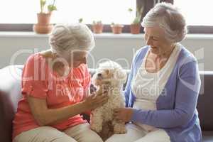 Senior women stroking a dog