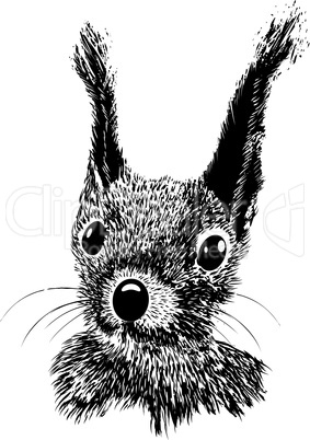 Squirrel head vector animal illustration for t-shirt. Sketch tattoo design.