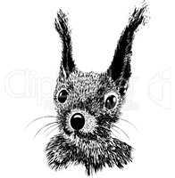 Squirrel head vector animal illustration for t-shirt