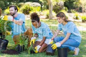 Group of volunteer planting