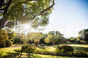 Picture of park with trees without people