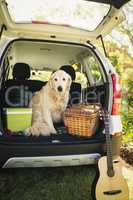 Focus on dog in a car
