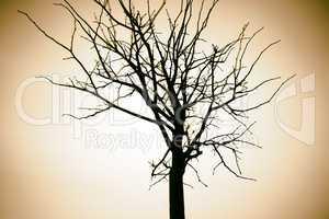 Horizontal sepia dry tree branch bokeh background