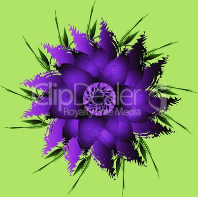 Lilac, purple peony flower.