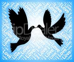 Love Doves Means Tenderness Loving And Affection