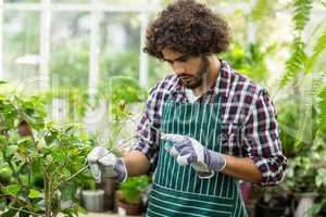 Gardener pruning plants at greenhouse