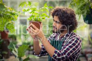 Male gardener examining potted plant