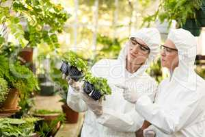 Female scientists in clean suit examining saplings